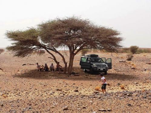 camel trekking deserto marocco